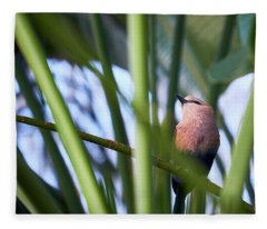 Fleece Blanket featuring the photograph Blue-bellied Roller by Whitney Goodey