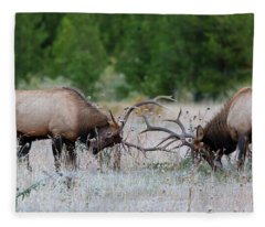 Bull Elk Battle Rocky Mountain National Park Fleece Blanket