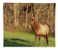 Bull Elk Fleece Blanket