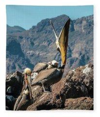 California Brown Pelicans In Ilsa Danzante Harbor Fleece Blanket