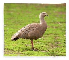 Cape Barron Goose Fleece Blanket