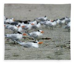 Caspian Terns Fleece Blanket