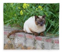 Cat On A Wall Fleece Blanket