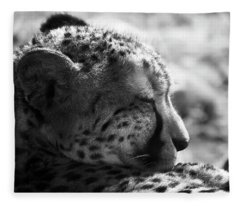 Fleece Blanket featuring the photograph Catnap by Whitney Goodey