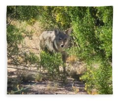 Fleece Blanket featuring the photograph Cautious Coyote by Judy Kennedy