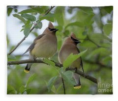 Cedar Waxwings Fleece Blanket