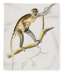 Cercopithecus Griseus  Guenon Grivet  Illustrated By Charles Dessalines D' Orbigny  1806-1876  Fleece Blanket