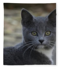 Chester 4 Fleece Blanket