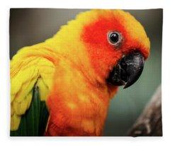 Close Up Of A Sun Conure Parrot. Fleece Blanket