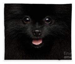 Close-up Portrait Of Happy Pomeranian Spitz Dog Fleece Blanket