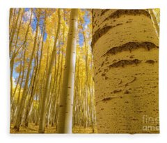 Colorado Aspen Grove Fleece Blanket