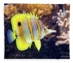 Copperband Butterfly Fish Fleece Blanket