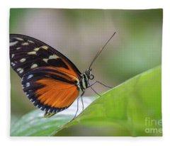 Cream-spotted Tigerwing 3 Fleece Blanket