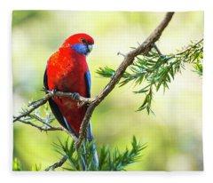 Crimson Rosella Fleece Blanket