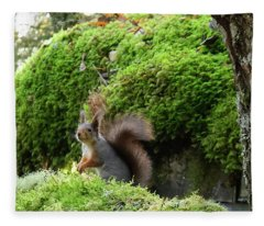 Curious Squirrel Fleece Blanket