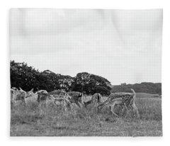 Deer Collection 5  Fleece Blanket