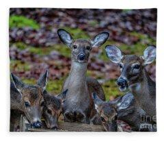 Deer Gathering Fleece Blanket