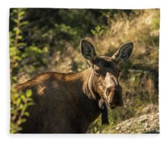 Denali Moose Fleece Blanket