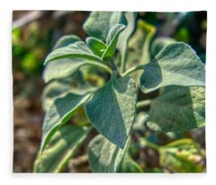 Desert Plant Life Fleece Blanket