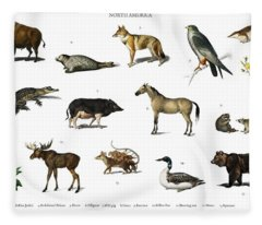 Different Types Of Animals Illustrated By Charles Dessalines D' Orbigny  1806-1876 3 Fleece Blanket