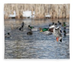 Drake Mallard 2019-1 Fleece Blanket