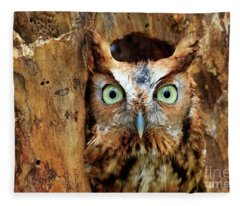 Eastern Screech Owl Perched In A Hole In A Tree Fleece Blanket