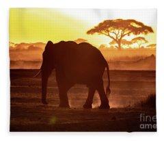 Elephant Walking Through Amboseli At Sunset Fleece Blanket