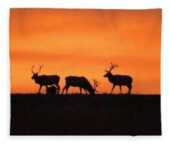 Elk In The Morning Light Fleece Blanket