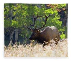 Fall Color Rocky Mountain Bull Elk Fleece Blanket