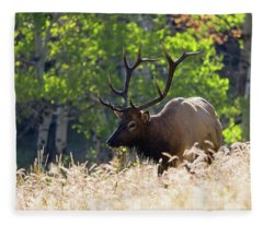 Fall Color Rocky Mountain Bull Elk Fleece Blanket