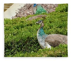 Female Peafowl At The Gardens Of Cecilio Rodriguez In Madrid, Spain Fleece Blanket
