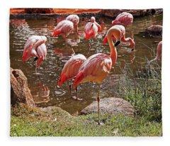 Flamingo  5  Fleece Blanket