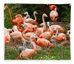 Flamingos Outdoors Fleece Blanket