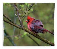 Fluffing Up My Feathers Fleece Blanket