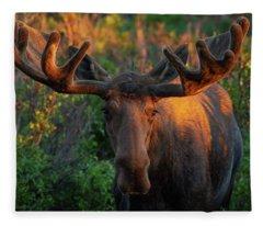 Forest King Sunrise Fleece Blanket