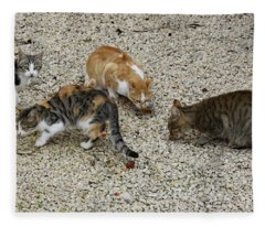 Four Foraging Felines Fleece Blanket