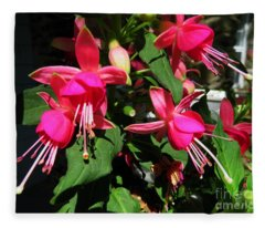 Fushia Fleece Blanket