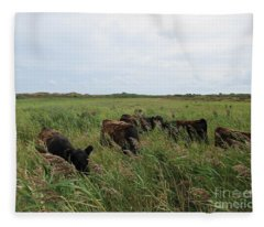 Galloway Cows On Texel North Holland Fleece Blanket
