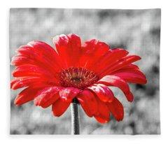 Gerbera Daisy Color Splash Fleece Blanket