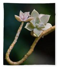 Ghost Plant Succulent Fleece Blanket