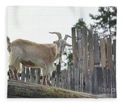 Goat On The Roof Fleece Blanket