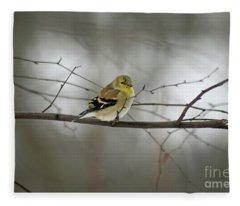 Goldfinch In Winter Looking At You Fleece Blanket
