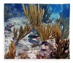 Gorgonian Parrotfish Fleece Blanket