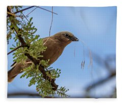 Gray-headed Social Weaver Fleece Blanket