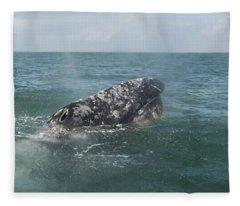 Gray Whale In Bahia Magdalena Fleece Blanket