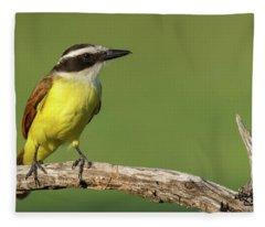 Great Kiskadee Fleece Blanket