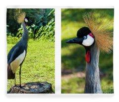 Grey Crowned Crane Gulf Shores Al Collage 10 Diptych Fleece Blanket