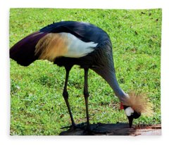 Gray Crowned Crane Gulf Shores F13119b Fleece Blanket