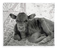 Grumpy Cow Fleece Blanket