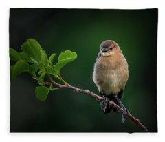 Hanging Around Fleece Blanket